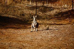 Ubytování Tamworth, Austrálie