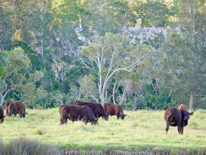 Ubytování Taree, Austrálie