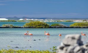 Levné Ubytování Bonaire