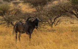 Ubytování Mafikeng, Jižní Afrika