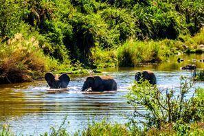 Ubytování Phalaborwa, Jižní Afrika