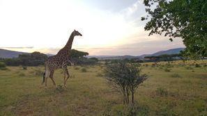 Ubytování Rustenburg, Jižní Afrika