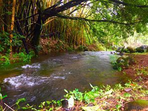 Ubytování Guapiles, Kostarika